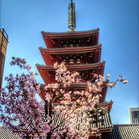 TOKYO GEZİ NOTLARI