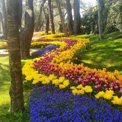 istanbul_piknik_yildiz_parki